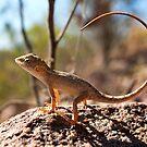 Inscrutable Australian Dragon by Bill  Robinson