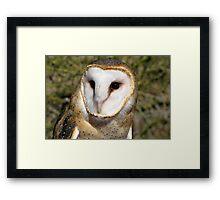 Barn Owl ~ Portrait Framed Print
