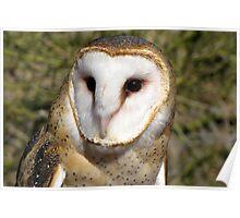 Barn Owl ~ Portrait Poster