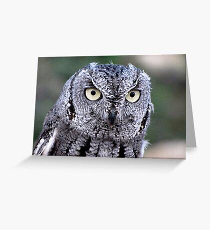 Western Screech-Owl Greeting Card