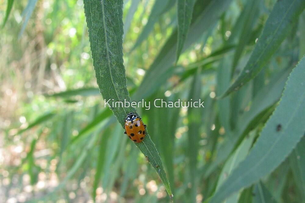Convergent Lady Beetle by Kimberly Chadwick