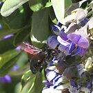 Pollination Series ~ 2 by Kimberly Chadwick
