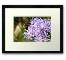 I Bee Collecting More Framed Print