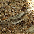 Horned Lizard ~ Desert by Kimberly P-Chadwick
