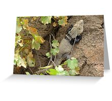 Sonoran Spiny-tailed Iguana ~ 2 (Male) Greeting Card