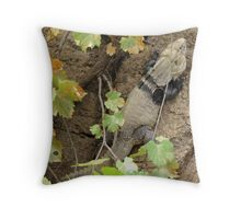 Sonoran Spiny-tailed Iguana ~ 2 (Male) Throw Pillow