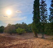Cypresses Watching over a Dry Field by Noam Gordon