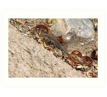 Gila/Sonoran Spotted Whiptail (Juvenile) Art Print