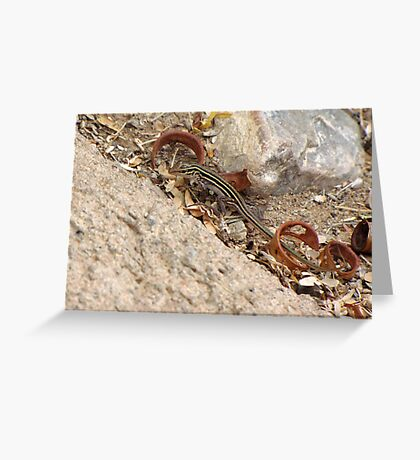 Gila/Sonoran Spotted Whiptail (Juvenile) Greeting Card