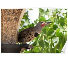 (BFF's) Gilded Flicker ~ Male  Poster