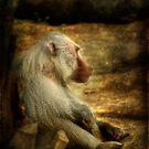 Baboon #1 by Robert  Welsh