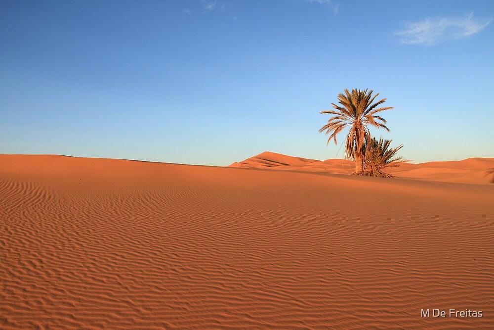 Morocco by Miguel De Freitas
