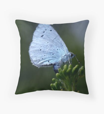 Holly blue butterfly egg laying. Throw Pillow