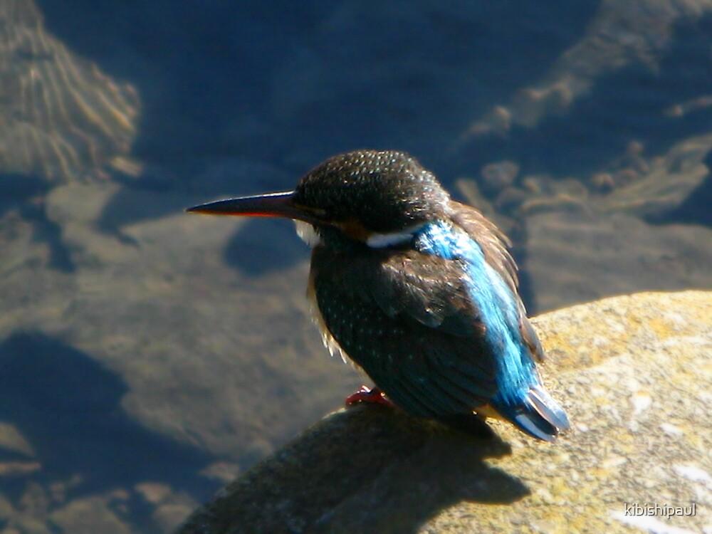 A Kingfisher in the Hand..... by kibishipaul