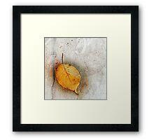 Leaf Portrait #5 Framed Print