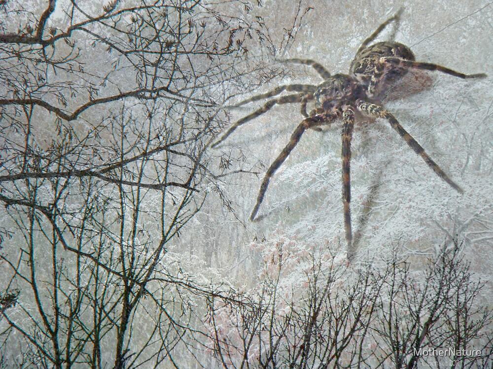 Spider Descending by MotherNature