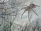 Spider Descending by MotherNature
