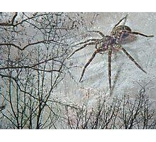 Spider Descending Photographic Print
