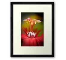 Red Orchid Framed Print