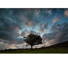 A Tree For Christmas Photographic Print