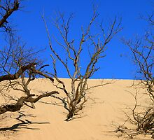Mt. Baldy Sand Dune by Joy Fitzhorn