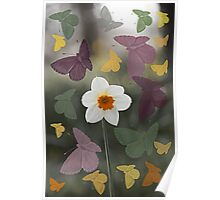 Daffodil Butterfly Dance Poster