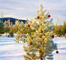 Christmas by Kim Barton