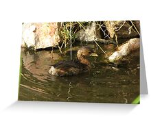 Pied-billed Grebe ~ Nonbreeding Adult Greeting Card
