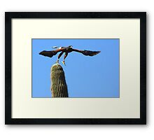 Harris's Hawk ~ Away I Go! Framed Print