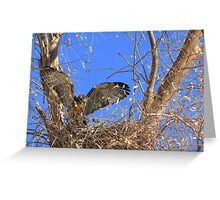 Red-tailed Hawk ~ Babies XII Greeting Card