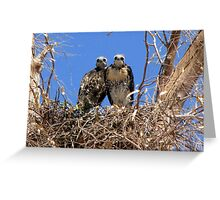 Red-tailed Hawk ~ Babies XI Greeting Card