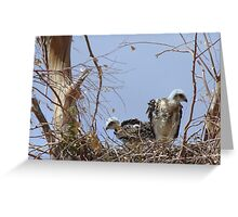 Red-tailed Hawks ~ Babies V Greeting Card