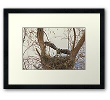 Red-tailed Hawks ~ Babies VI Framed Print