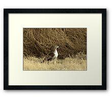Red-tailed Hawk ~ Sitting Still Framed Print