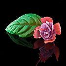 Fuchsia XXVII by Tom Newman