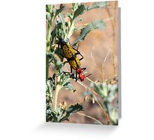 Iron-Cross Blister Beetle Greeting Card