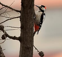 Great Spotted Woodpecker  by Vasil Popov