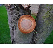 Love Wood Photographic Print