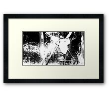 Caught in the Lights  Framed Print