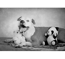 I Do Love My Teddies!  Photographic Print