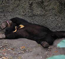 wasted cub by FLLETCHER
