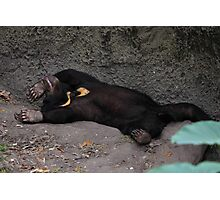 wasted cub Photographic Print