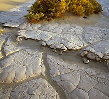 Death Valley Mudflat by Inge Johnsson