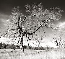 bare trees by Jim  Hughes