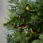 Birds in my tamarack tree. by Sandra Foster