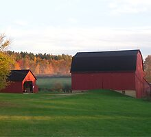 Red Barns in Autumn by TrendleEllwood