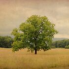 Vintage Summer-Cades Cove by Shane Jones