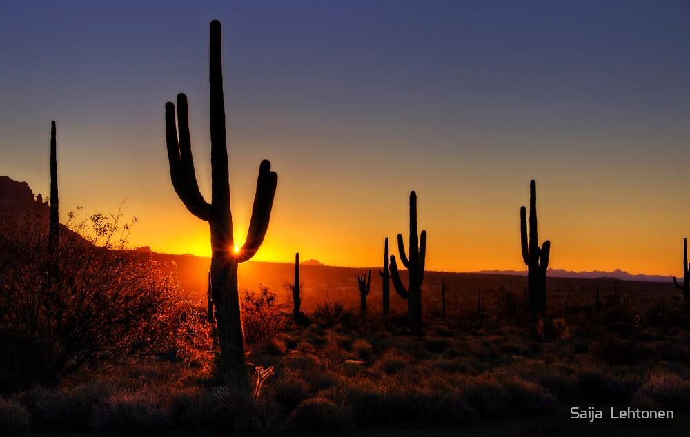 Christmas Morning in Arizona  by Saija  Lehtonen