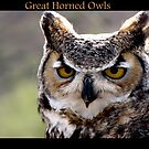 Great Horned Owls by Kimberly Chadwick