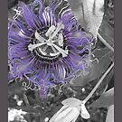 Selective Color in Nature by Kimberly Chadwick